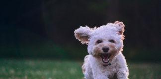 integratori cane